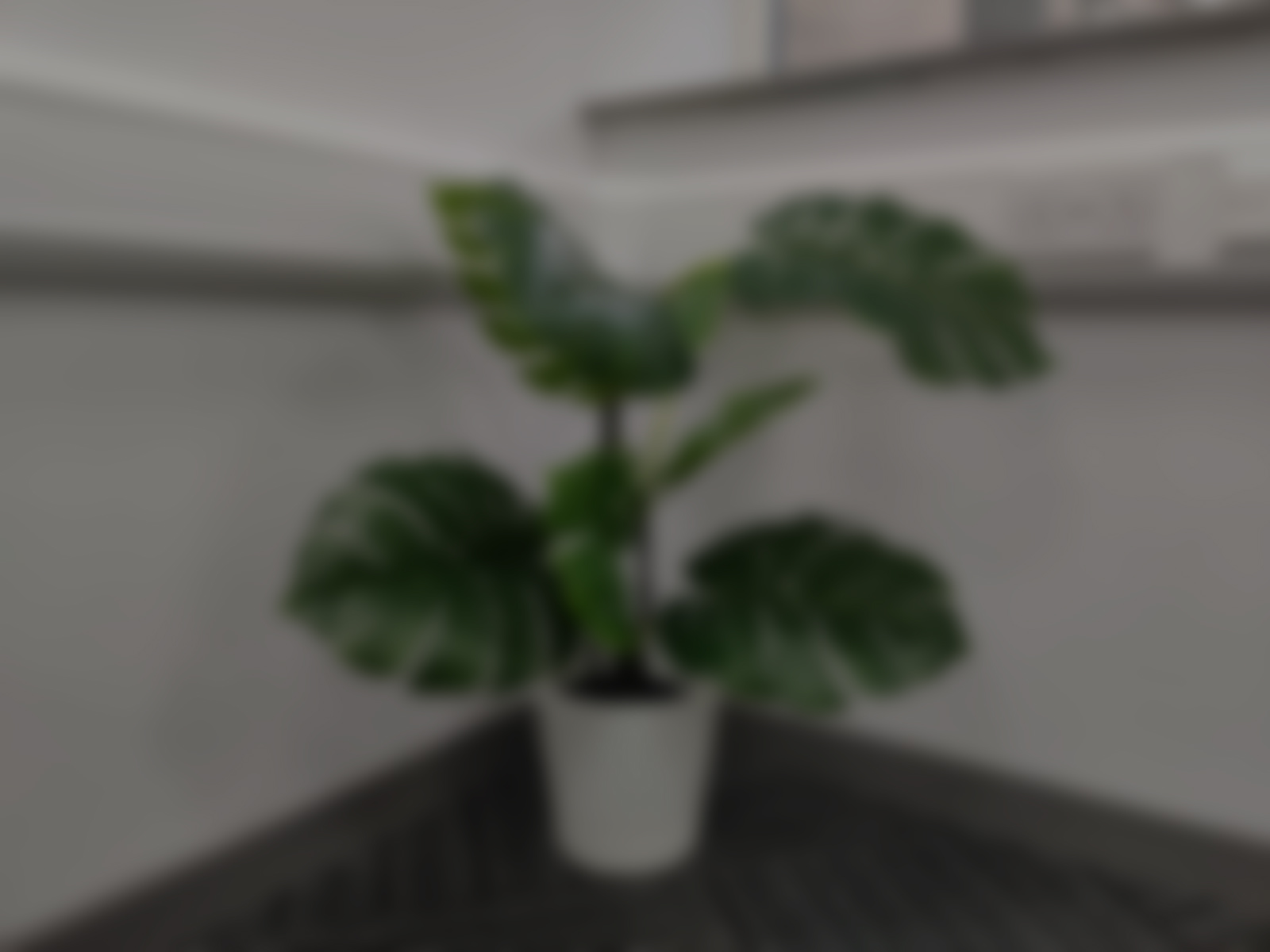 office plant blurred